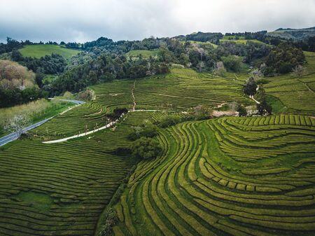 Grüntee-Terrassenplantage Gorreana im Nebel von oben, Drohnenschuss, Azoren-Inseln. Die älteste und derzeit einzige Teeplantage Europas. Vogelperspektive, Luftpanoramablick.