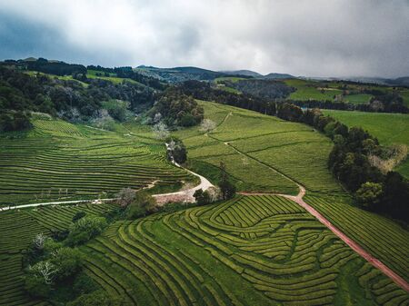 Green tea terrace plantation Gorreana in fog from above, drone shot, Azores islands. The oldest, and currently only, tea plantation in Europe. Bird eye view, aerial panoramic view. Imagens - 127424780