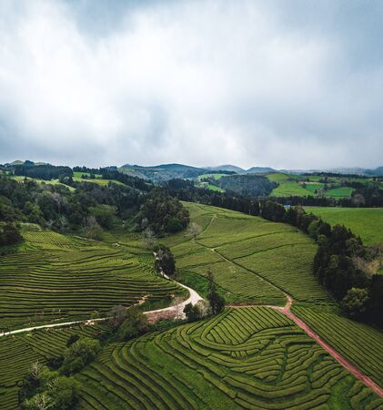 Green tea terrace plantation Gorreana in fog from above, drone shot, Azores islands. The oldest, and currently only, tea plantation in Europe. Bird eye view, aerial panoramic view. Imagens