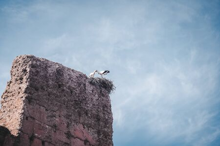 Pair of White Storks on a stick nest and ruined building of Badi palace in the medina of Marrakech Morocco, North Africa. Photo taken in Morocco.