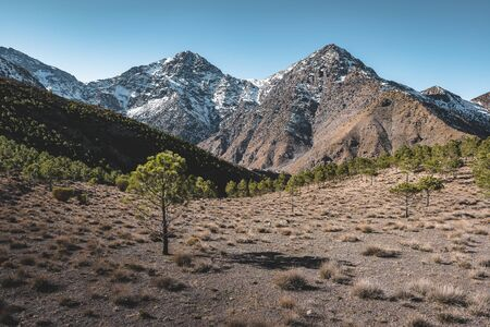 Snow covered peaks of Toubkal National Park Morocco, High Atlas Mountains. Sunrise light with blue sky. Small forect in the foreground. Photo taken in Morocco. 版權商用圖片