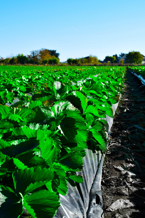 green agriculture farmland