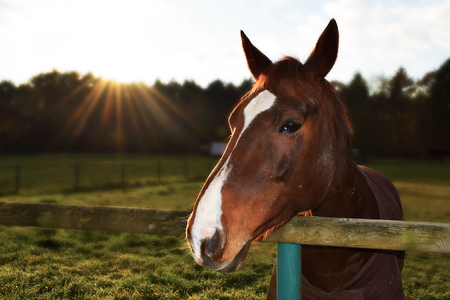 Brown Horse in the sun Banco de Imagens