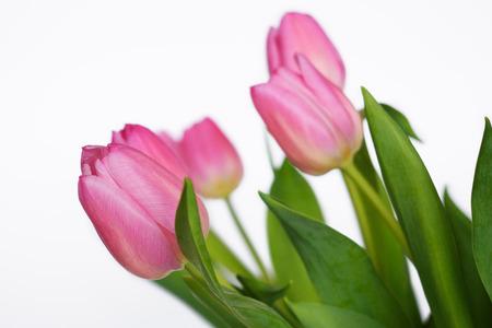 pink tulips Banco de Imagens