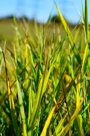 green grasss in the morning Banco de Imagens