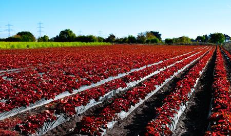 Red farmland Banco de Imagens