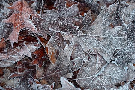Frozen Forest Floor Banco de Imagens