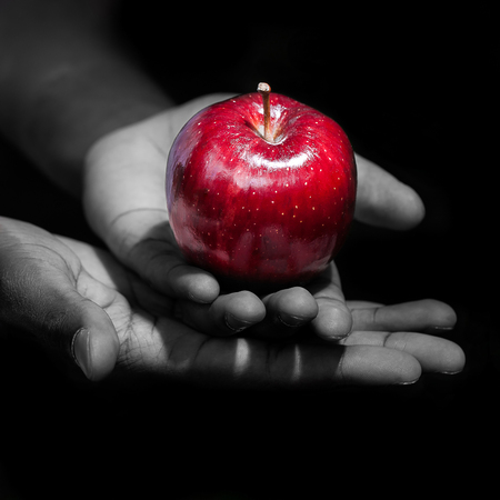 Hands holding a red apple, the forbidden fruit, in black background.