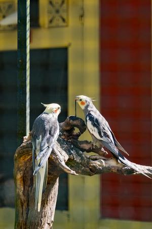 Tropical bird Standard-Bild - 120081111