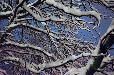 Snow tree 写真素材