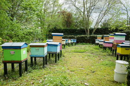 Bee houses Stock fotó