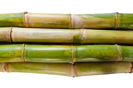 Bunch of fresh sugar cane in white background