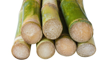 Bunch of fresh sugar cane in white background photo