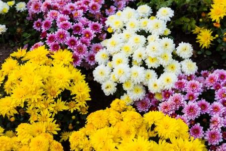 Красочные цветы на фоне
