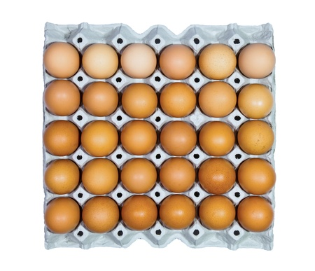 Eggs in paper tray on white background photo