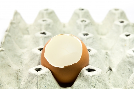 Empty egg on tray on white background photo