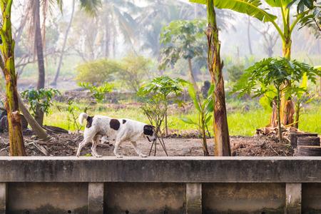 Черно-белая женщина собака на бетонной стенки канала в растительном хозяйстве