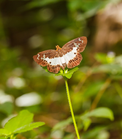 extensive: The Extensive white Flat open wings on green plant Stock Photo