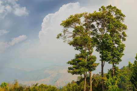 Trees on high mountain , cloud and sky Stock Photo