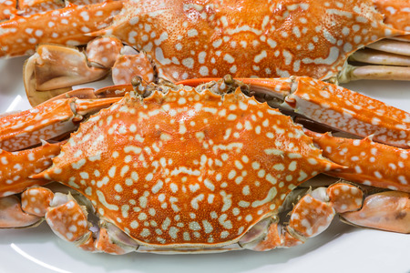 blue swimmer crab: Close up of streamed blue crabs (sand crab) Stock Photo