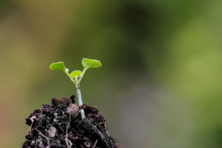 plant growth: Green sprout growing from ground Stock Photo