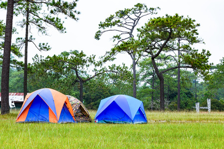 Dome tents camping near pine tree on high mountain after raining