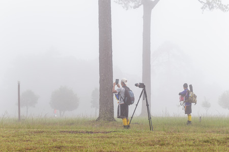 pinaceae: LOEI, THAILAND - Oct 2 : Traveller and Photographer are taking photo of the mist on 2 Oct 2015 at Phu Kradueng National Park, Loei, Thailand Editorial