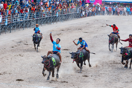 racing festival: CHONBURI - OCTOBER 26 : Unidentified participants in 144th Buffalo Racing Festival on October 26, 2015. Chonburi, Thailand. Buffalo Racing Festival is a tradition of Chonburi. Editorial