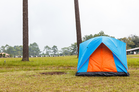 camping tent: Dome tents camping near pine tree on high mountain after raining