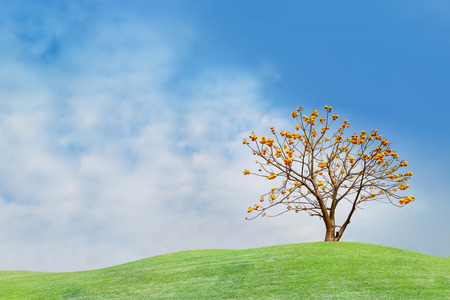 Yellow flower tree on green hill and blue sky