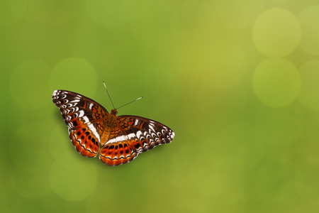 Commander butterfly ( Moduza procris ) flying with green background Stock Photo