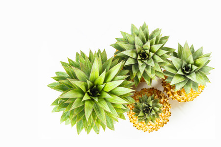 Close up detail at top of pineapple trees on white Stock Photo