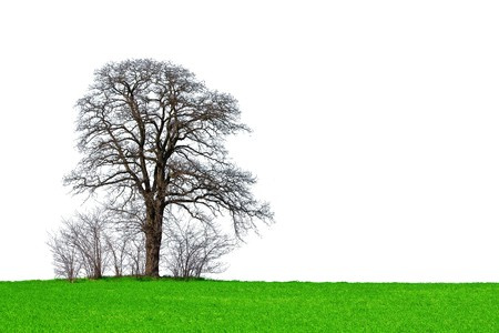 Lone tree Stock Photo - 6915762