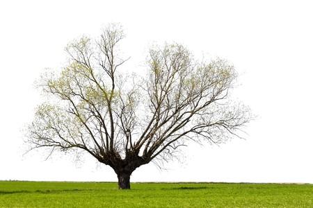 Lone tree Stock Photo - 6915753