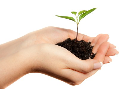 Isolated young plant in woman hands Stock Photo - 6916349