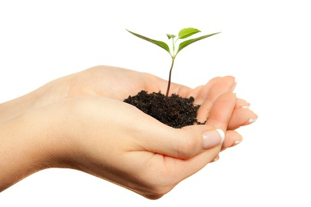 Isolated young plant in woman hands photo