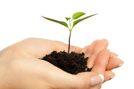 Isolated young plant in woman hands Stock Photo - 6916344