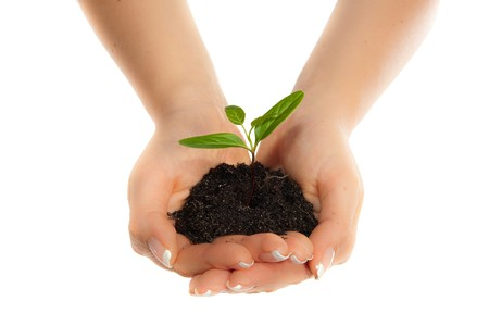 dirt: Isolated young plant in woman hands Stock Photo