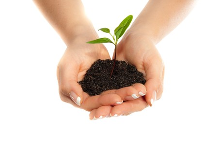 small plant: Isolated young plant in woman hands Stock Photo