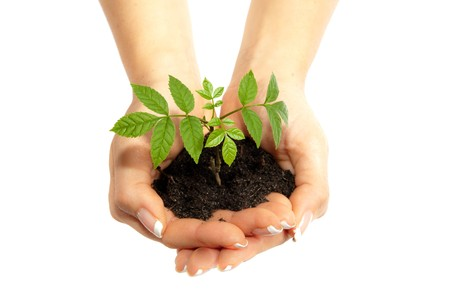 earth handful: Isolated young plant in woman hands Stock Photo