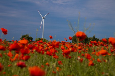 Poppy field meadow with wind turbine photo