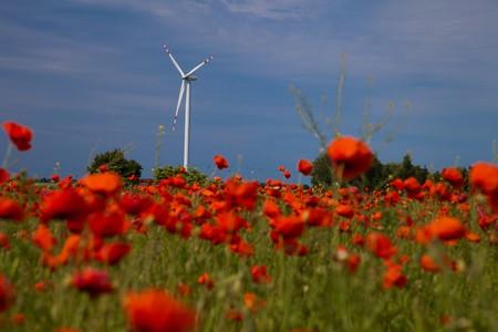Poppy field meadow with wind turbine Stock Photo - 7267203