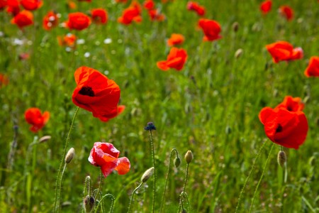 Poppy field meadow with wind turbine Stock Photo - 7267180