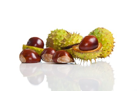 Composition of autumn chestnuts and leaves on isolated background Stock Photo - 7779781