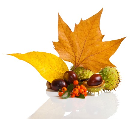 Composition of autumn chestnuts and leaves on isolated background photo