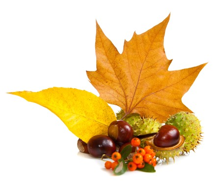 Composition of autumn chestnuts and leaves on isolated background Stock Photo - 7779780