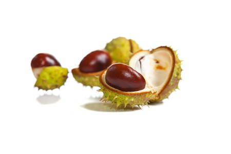 chestnut tree: Composition of autumn chestnuts and leaves on isolated background Stock Photo