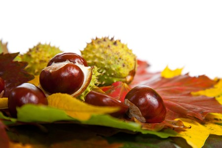 Composition of autumn chestnuts and leaves on isolated background Stock Photo - 7779825