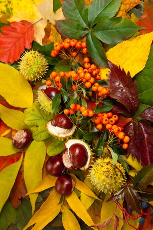 Composition of autumn chestnuts and leaves on isolated background Stock Photo - 7779923