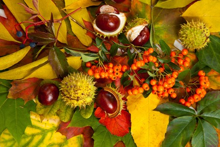 Composition of autumn chestnuts and leaves on isolated background Stock Photo - 7779922